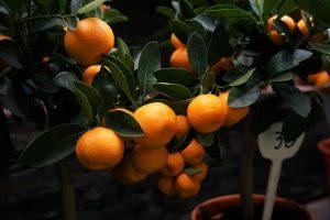 Zoopharmafrance Fleur Oranger 1