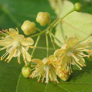Zoopharmafrance Fleurtilleul Eauflorale 1