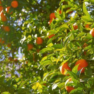 zoopharmafrance orange douce 1